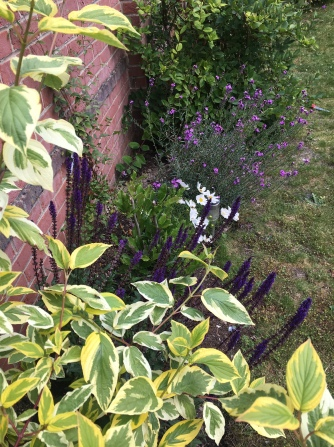 herbaceous border in late spring
