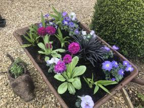 spring wheelbarrow planter