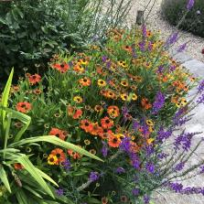 late summer border